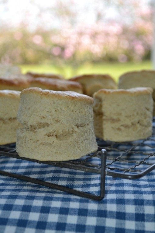 Scones_warm_from_the_AGA