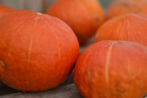 squash_pumpkin_