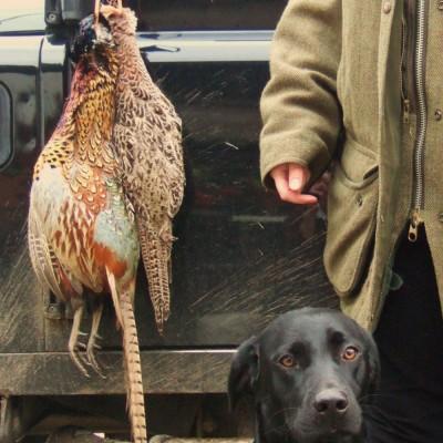 brodie_pheasant
