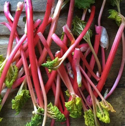 RECIPE: Forced Garden Rhubarb