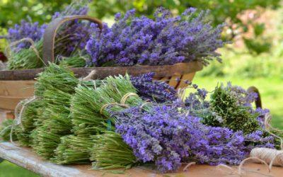 July & August: Kitchen Garden Tasks