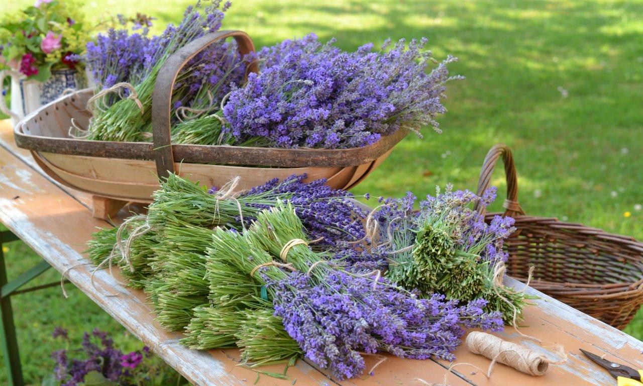 Summer_garden_tasks