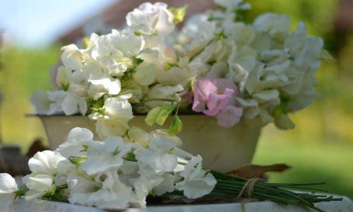 cut_flower_gift_voucher