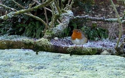How to feed your garden birds this winter.
