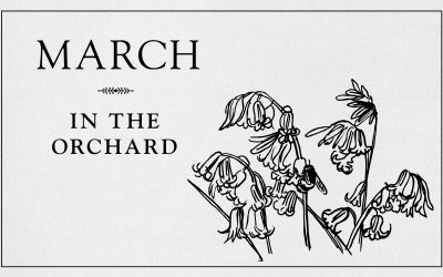 Early March: This weekend in the garden.