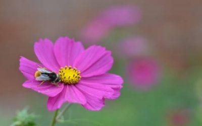 Making the most of your garden in September
