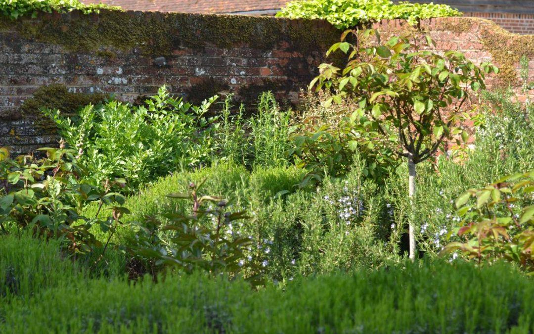 Preparing your herb garden for winter.